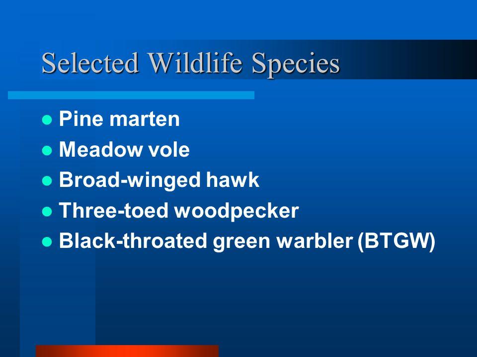 Selected Wildlife Species Pine marten Meadow vole Broad-winged hawk Three-toed woodpecker Black-throated green warbler (BTGW)