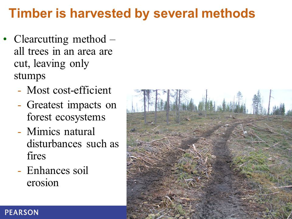 © 2010 Pearson Education Canada Copyright © 2013 Pearson Canada Inc. Timber is harvested by several methods Clearcutting method – all trees in an area