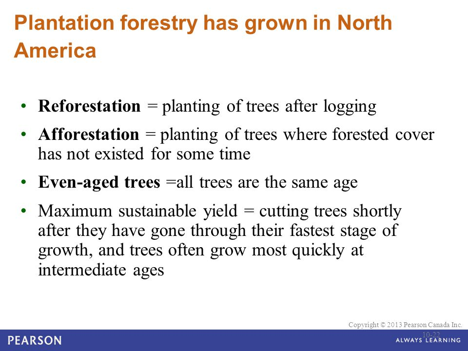 © 2010 Pearson Education Canada Copyright © 2013 Pearson Canada Inc. Plantation forestry has grown in North America Reforestation = planting of trees