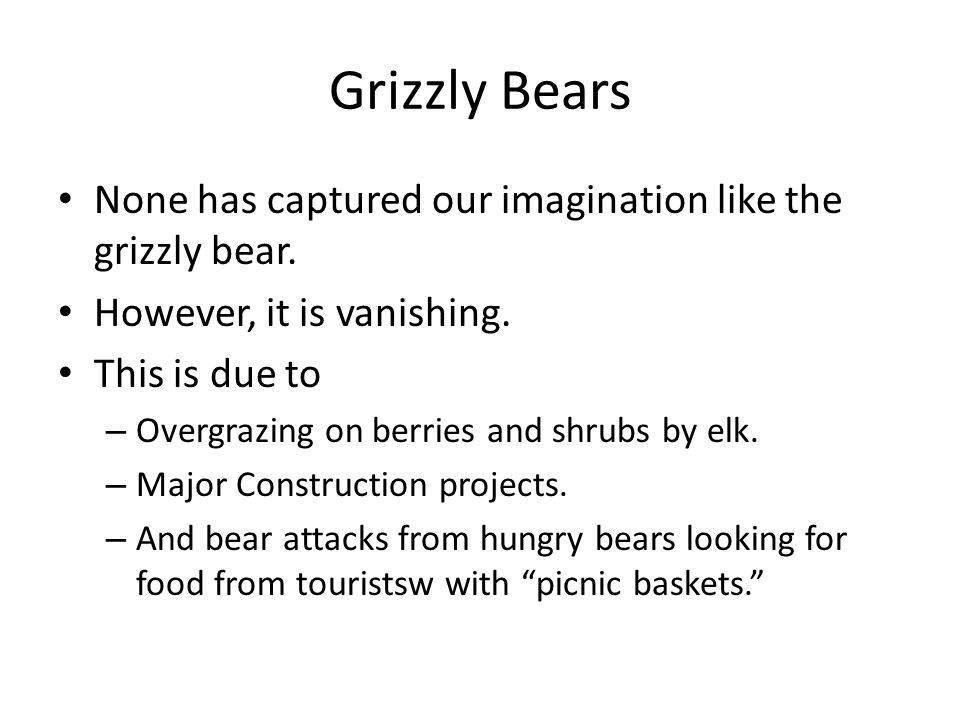 Grizzly Bears None has captured our imagination like the grizzly bear.