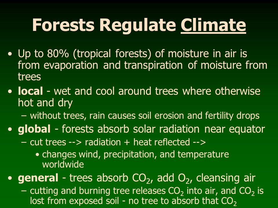 Old Growth Forests provide - greater diversity of plants - greater diversity of animals -tree cavities!.