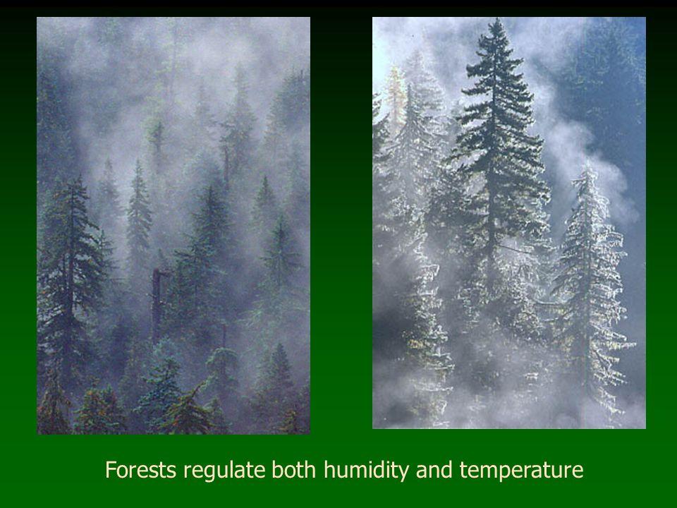 Forest Edge – good or bad.EDGE habitat in treefall gap vs.