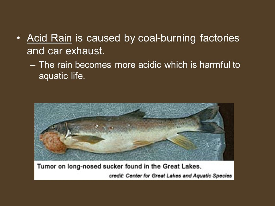 Acid Rain is caused by coal-burning factories and car exhaust. –The rain becomes more acidic which is harmful to aquatic life.
