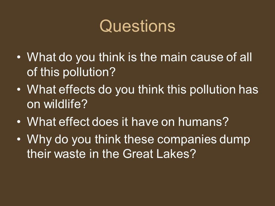 Questions What do you think is the main cause of all of this pollution? What effects do you think this pollution has on wildlife? What effect does it