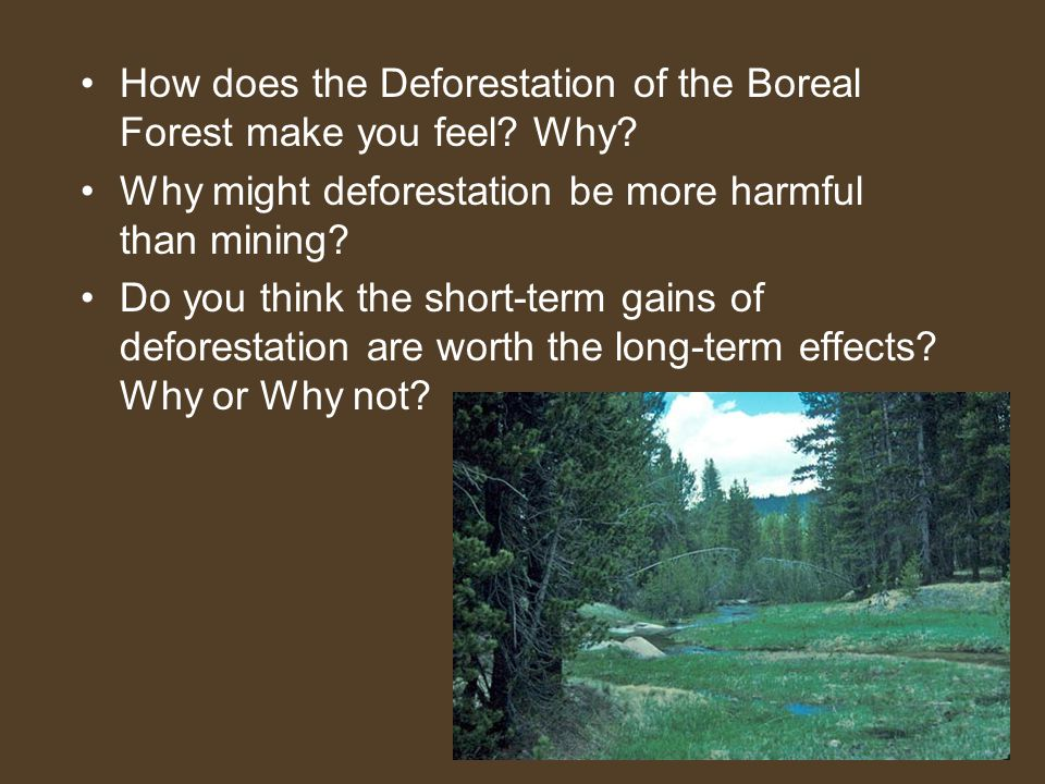 How does the Deforestation of the Boreal Forest make you feel? Why? Why might deforestation be more harmful than mining? Do you think the short-term g