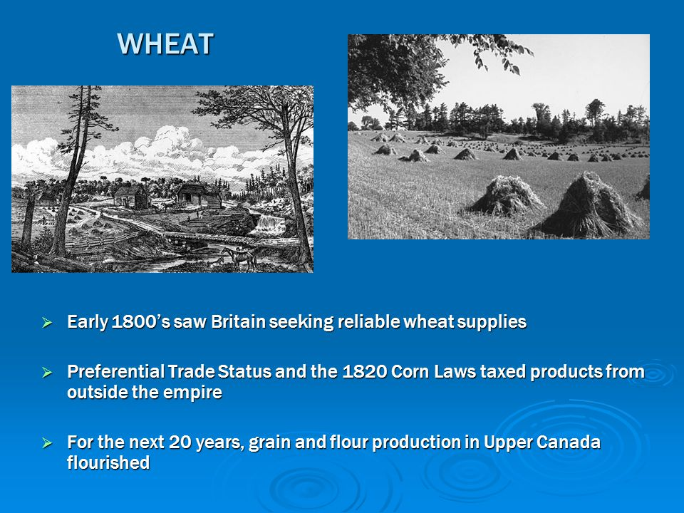 WHEAT  Early 1800's saw Britain seeking reliable wheat supplies  Preferential Trade Status and the 1820 Corn Laws taxed products from outside the em
