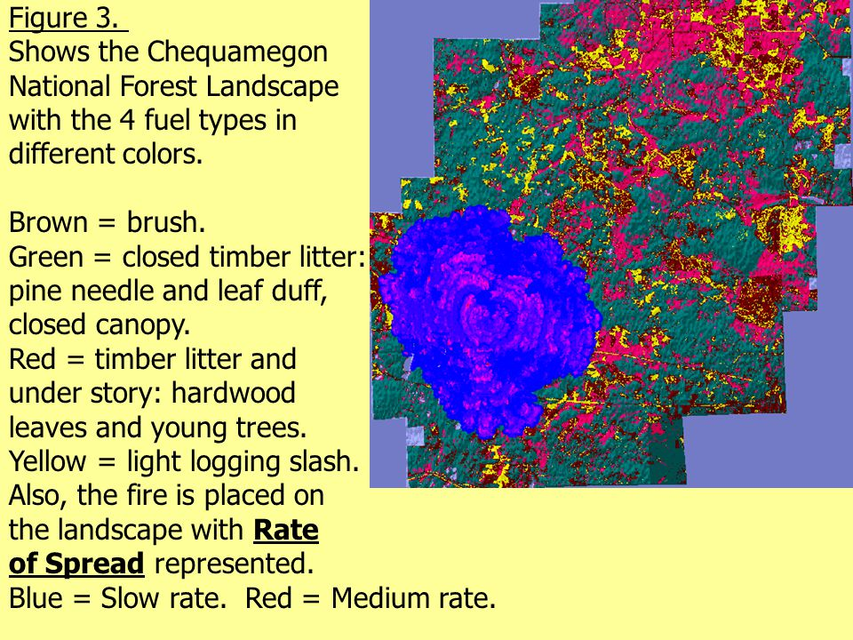 Figure 3. Shows the Chequamegon National Forest Landscape with the 4 fuel types in different colors. Brown = brush. Green = closed timber litter: pine