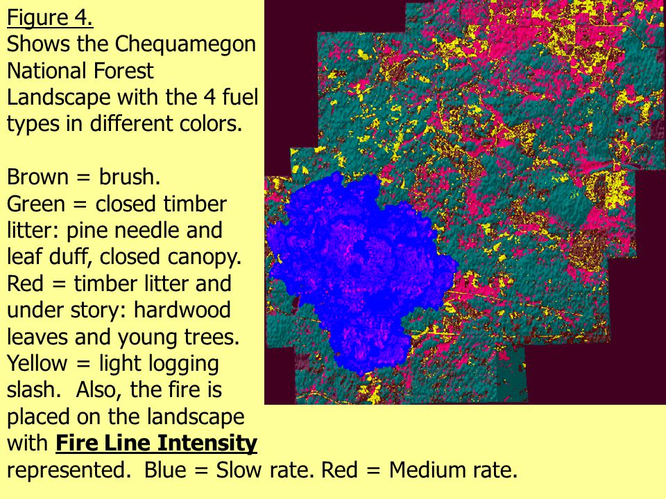 Figure 4. Shows the Chequamegon National Forest Landscape with the 4 fuel types in different colors. Brown = brush. Green = closed timber litter: pine