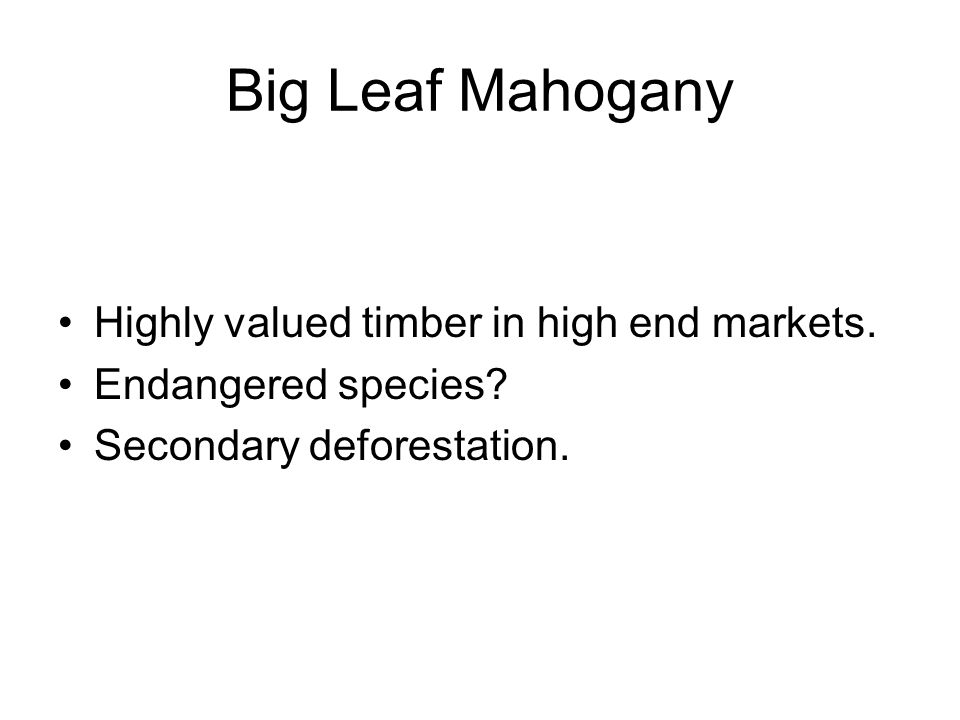 Big Leaf Mahogany Highly valued timber in high end markets.