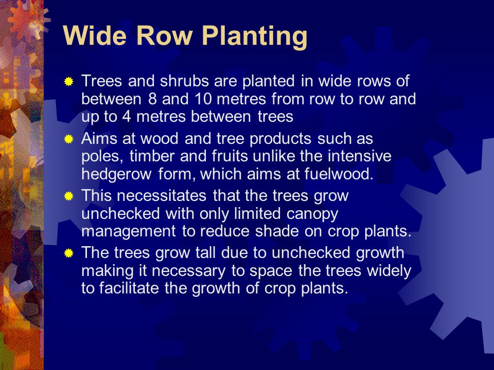 Wide Row Planting  Trees and shrubs are planted in wide rows of between 8 and 10 metres from row to row and up to 4 metres between trees  Aims at wood and tree products such as poles, timber and fruits unlike the intensive hedgerow form, which aims at fuelwood.