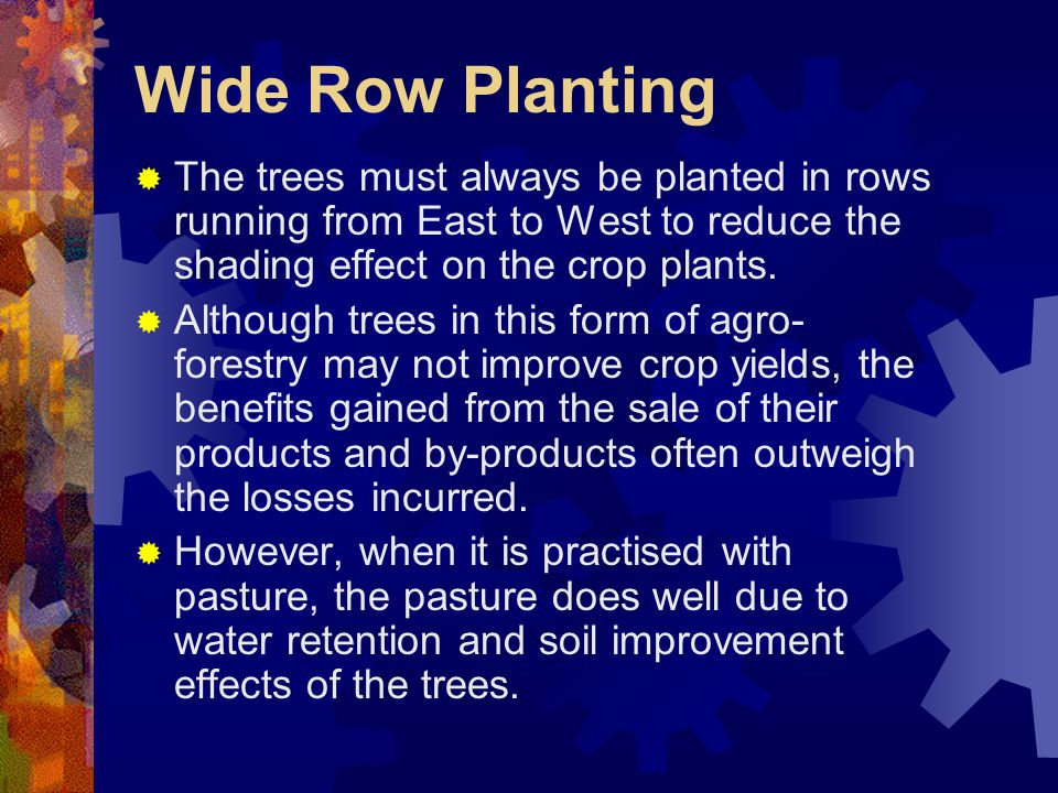 Wide Row Planting  The trees must always be planted in rows running from East to West to reduce the shading effect on the crop plants.