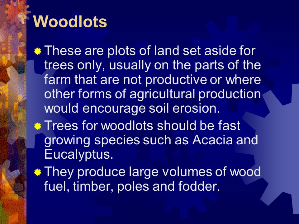 Woodlots  These are plots of land set aside for trees only, usually on the parts of the farm that are not productive or where other forms of agricultural production would encourage soil erosion.
