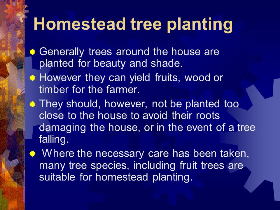 Homestead tree planting  Generally trees around the house are planted for beauty and shade.