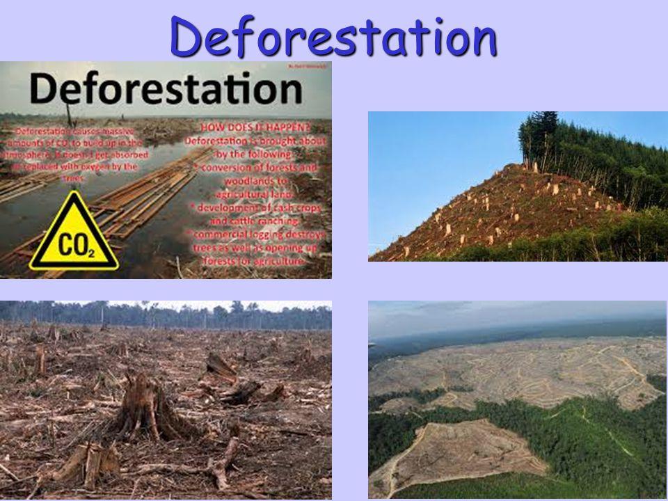 Essays About Deforestation