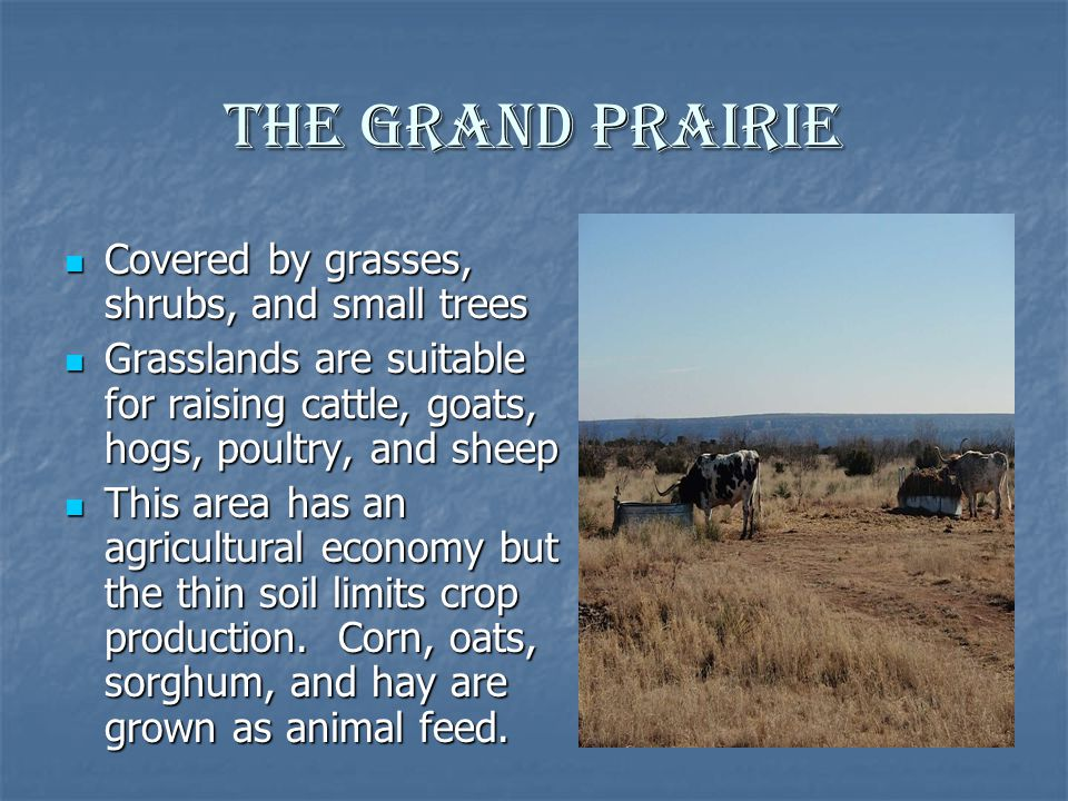 The Grand Prairie Covered by grasses, shrubs, and small trees Covered by grasses, shrubs, and small trees Grasslands are suitable for raising cattle,