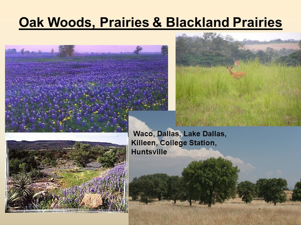 Oak Woods, Prairies & Blackland Prairies Waco, Dallas, Lake Dallas, Killeen, College Station, Huntsville