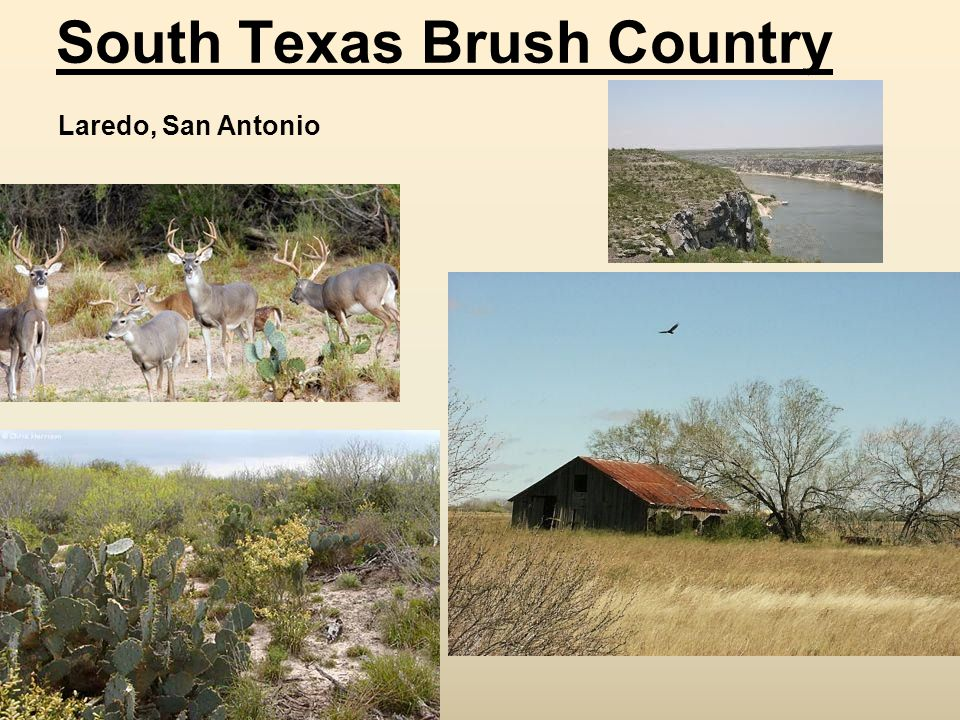 South Texas Brush Country Laredo, San Antonio