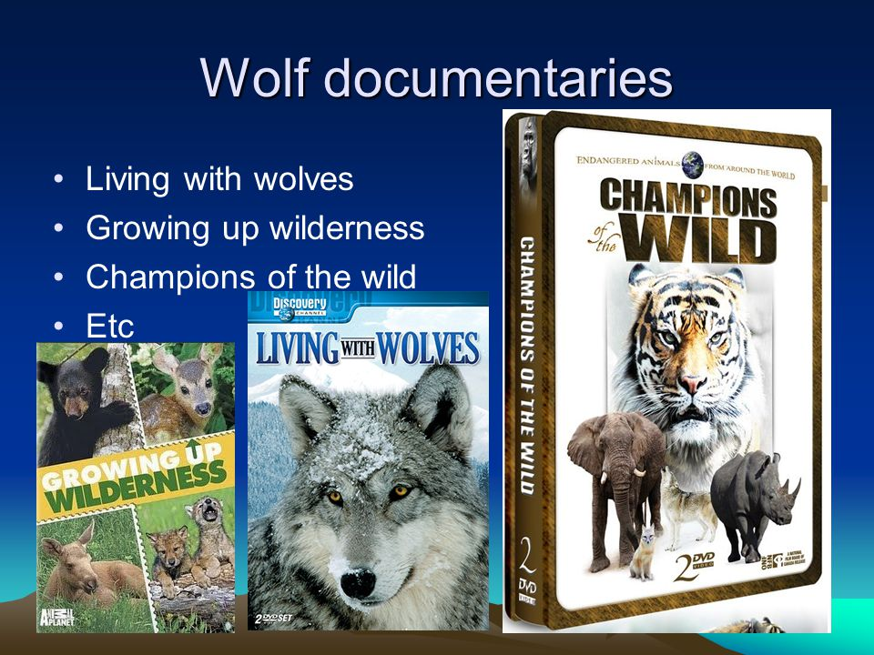Wolf documentaries Living with wolves Growing up wilderness Champions of the wild Etc