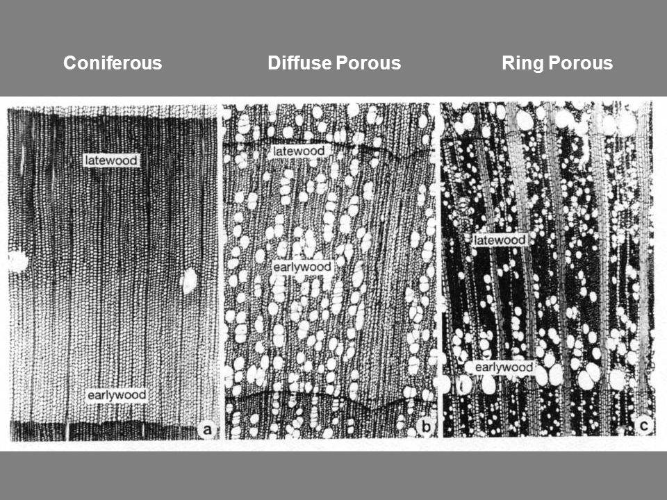 Coniferous Diffuse Porous Ring Porous