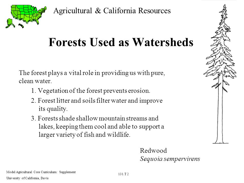 Agricultural & California Resources Model Agricultural Core Curriculum: Supplement University of California, Davis 131.T 2 Forests Used as Watersheds The forest plays a vital role in providing us with pure, clean water.
