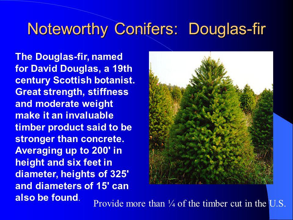 Noteworthy Conifers: Douglas-fir The Douglas-fir, named for David Douglas, a 19th century Scottish botanist. Great strength, stiffness and moderate we