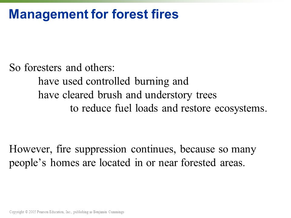 Copyright © 2005 Pearson Education, Inc., publishing as Benjamin Cummings Management for forest fires So foresters and others: have used controlled burning and have cleared brush and understory trees to reduce fuel loads and restore ecosystems.