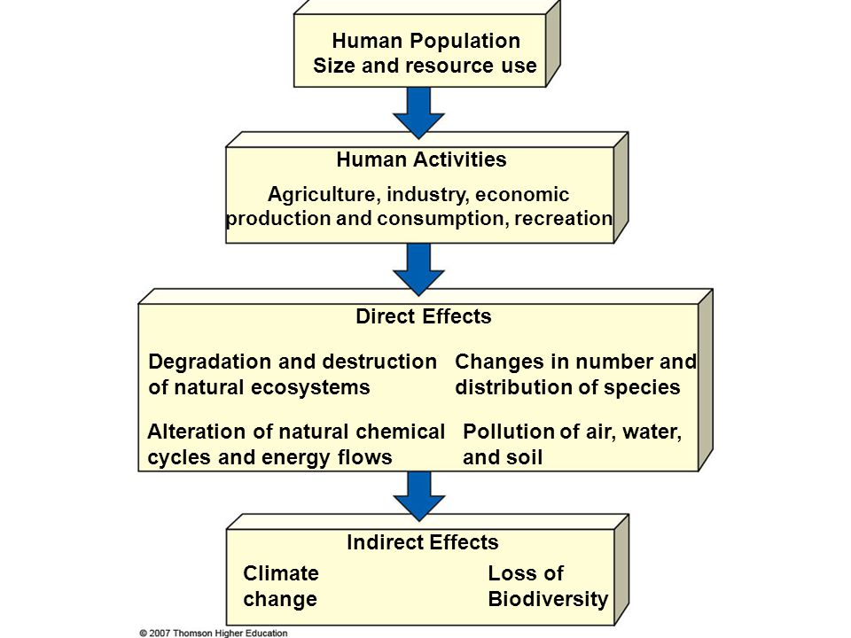 ECOLOGICAL RESTORATION  Restoration: trying to return to a condition as similar as possible to original state.