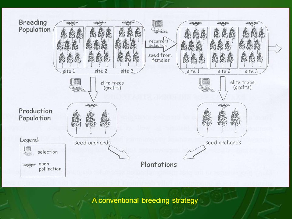 A conventional breeding strategy