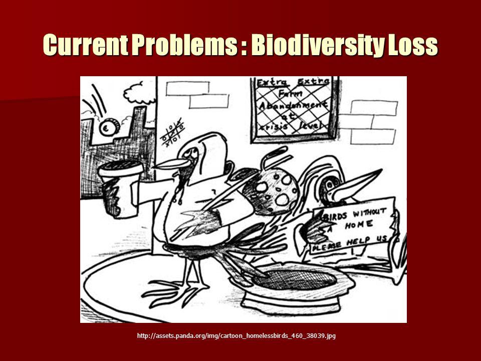 Current Problems : Biodiversity Loss http://assets.panda.org/img/cartoon_homelessbirds_460_38039.jpg