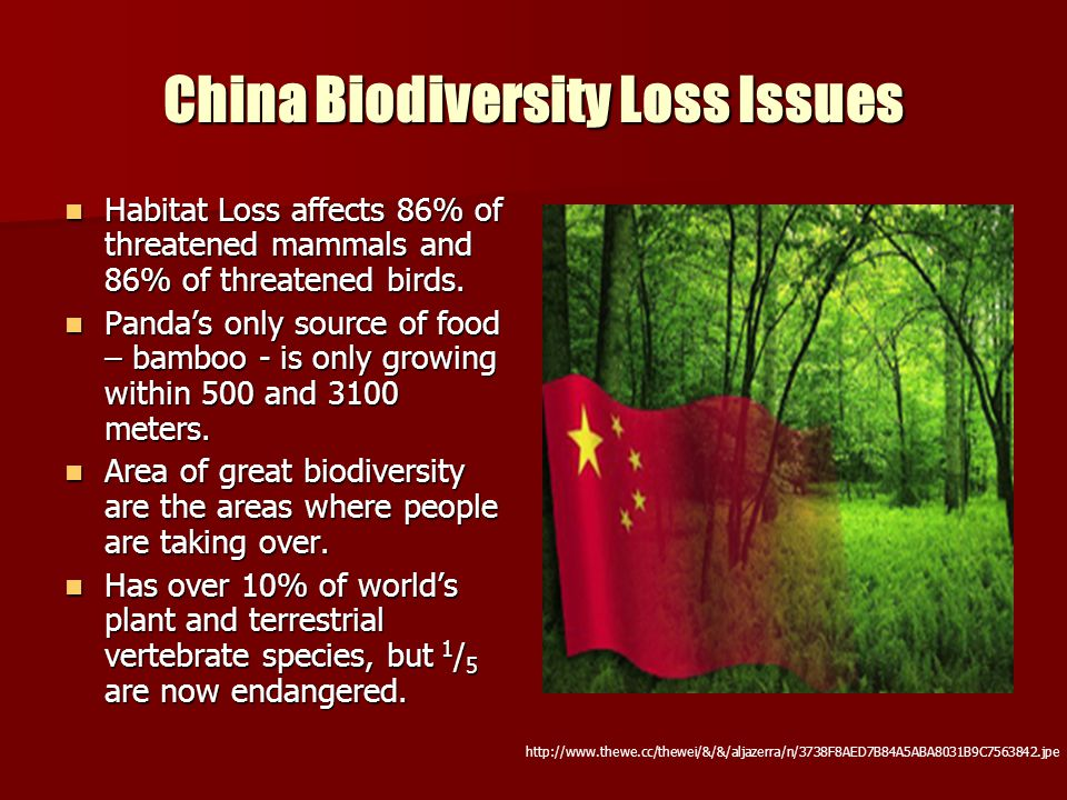 China Biodiversity Loss Issues Habitat Loss affects 86% of threatened mammals and 86% of threatened birds. Habitat Loss affects 86% of threatened mamm