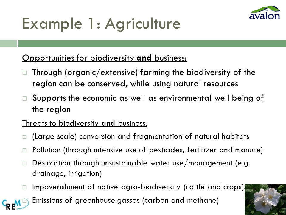 Example 1: Agriculture Opportunities for biodiversity and business:  Through (organic/extensive) farming the biodiversity of the region can be conserved, while using natural resources  Supports the economic as well as environmental well being of the region Threats to biodiversity and business:  (Large scale) conversion and fragmentation of natural habitats  Pollution (through intensive use of pesticides, fertilizer and manure)  Desiccation through unsustainable water use/management (e.g.