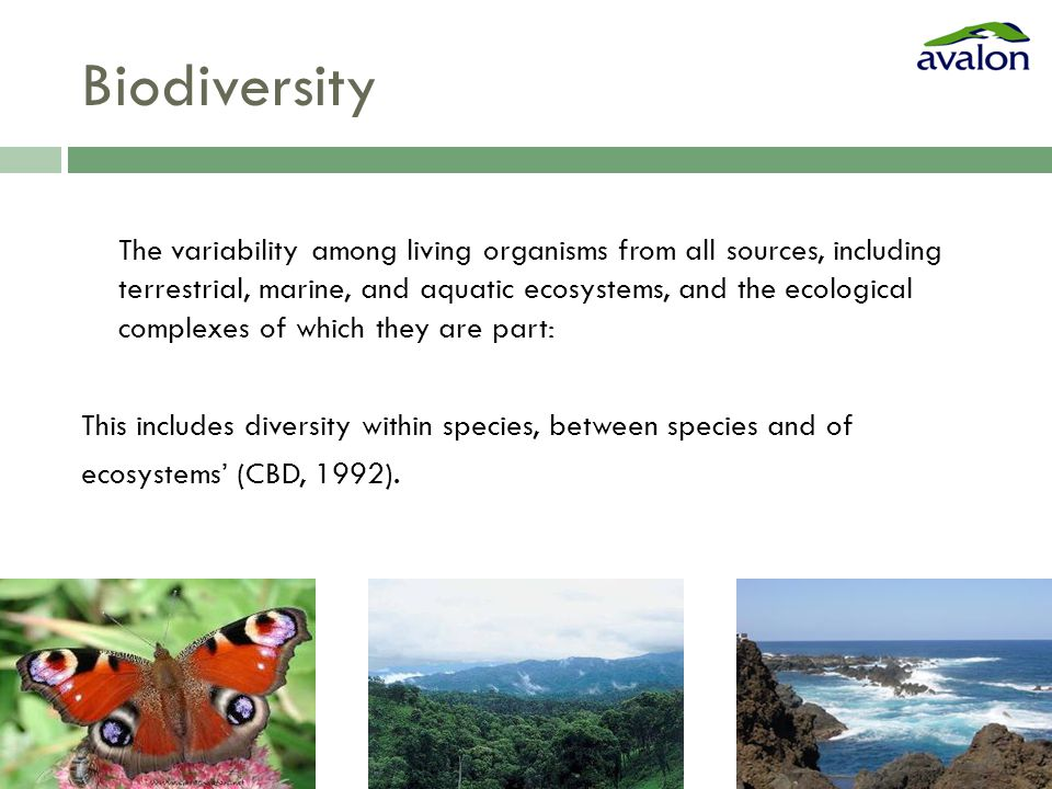 Biodiversity The variability among living organisms from all sources, including terrestrial, marine, and aquatic ecosystems, and the ecological complexes of which they are part: This includes diversity within species, between species and of ecosystems' (CBD, 1992).