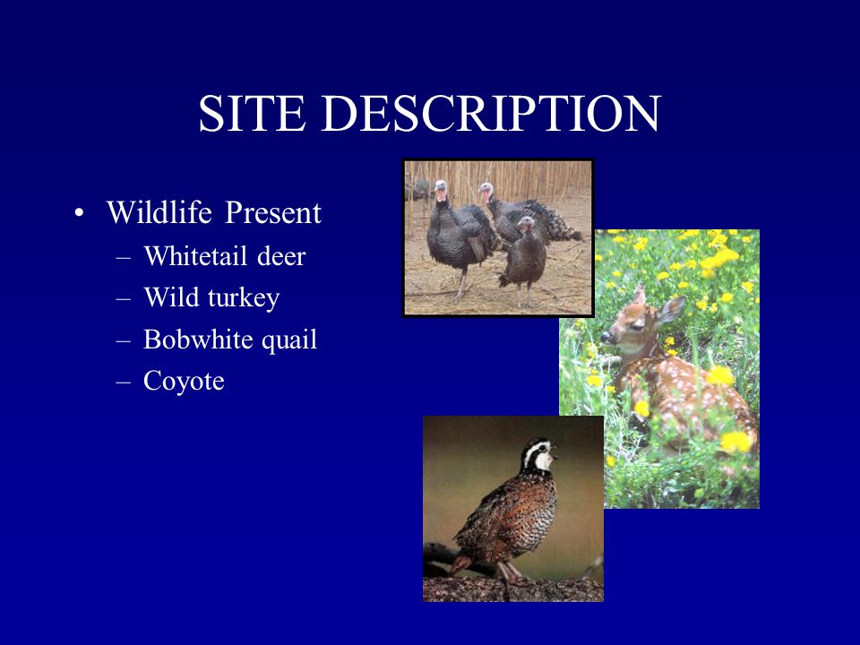 SITE DESCRIPTION Wildlife Present –Whitetail deer –Wild turkey –Bobwhite quail –Coyote