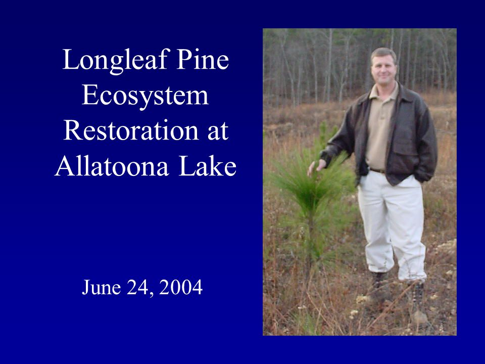 Longleaf Pine Ecosystem Restoration at Allatoona Lake June 24, 2004