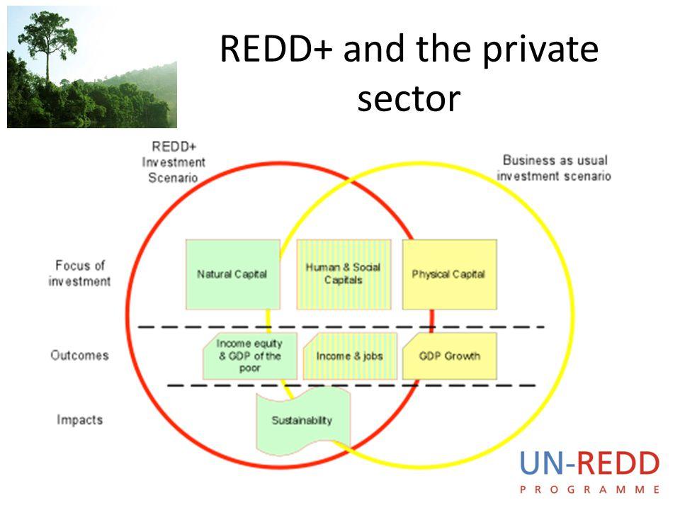 UN-REDD P R O G R A M M E REDD+ and the private sector