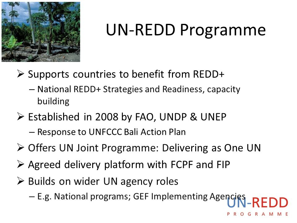 UN-REDD P R O G R A M M E National UN-REDD Programmes  16 partner countries currently receiving direct funding support, 40 partner countries total