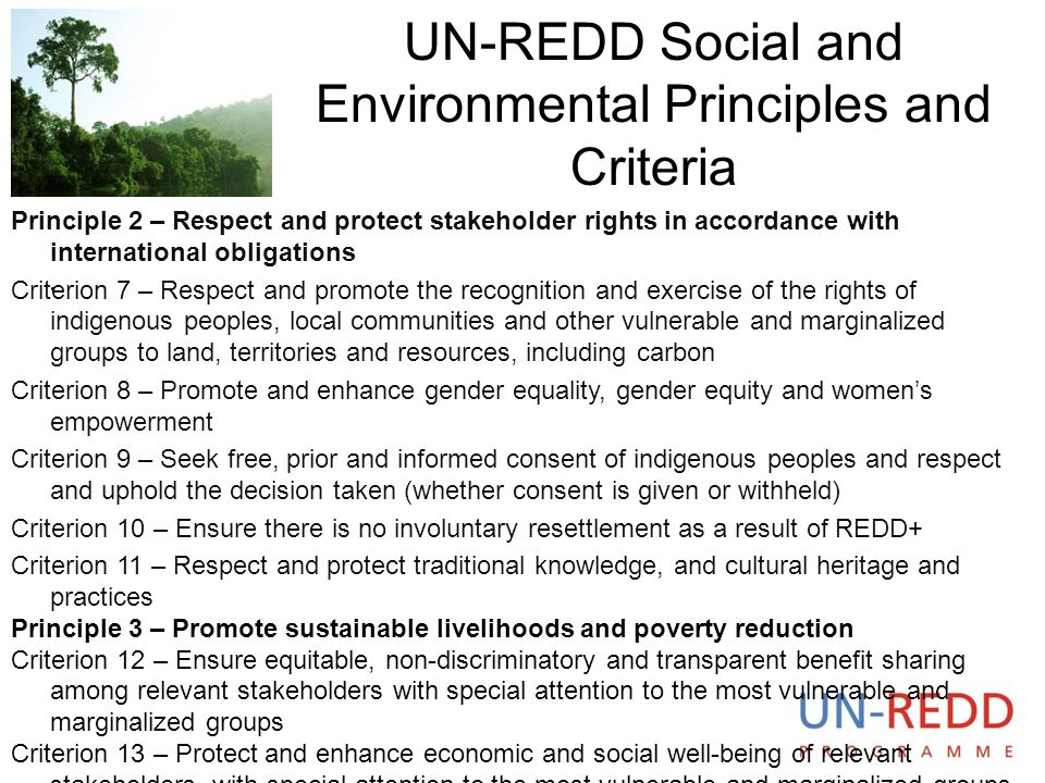 UN-REDD Social and Environmental Principles and Criteria. Principle 2 – Respect and protect stakeholder rights in accordance with international obliga