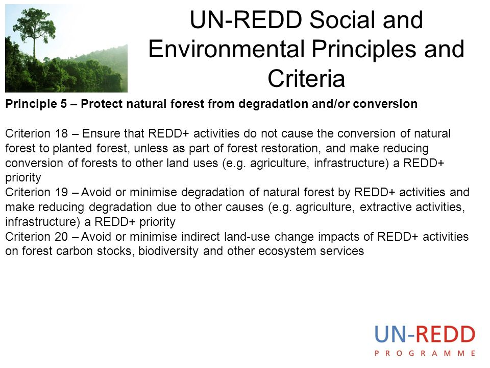 UN-REDD Social and Environmental Principles and Criteria. Principle 5 – Protect natural forest from degradation and/or conversion Criterion 18 – Ensur