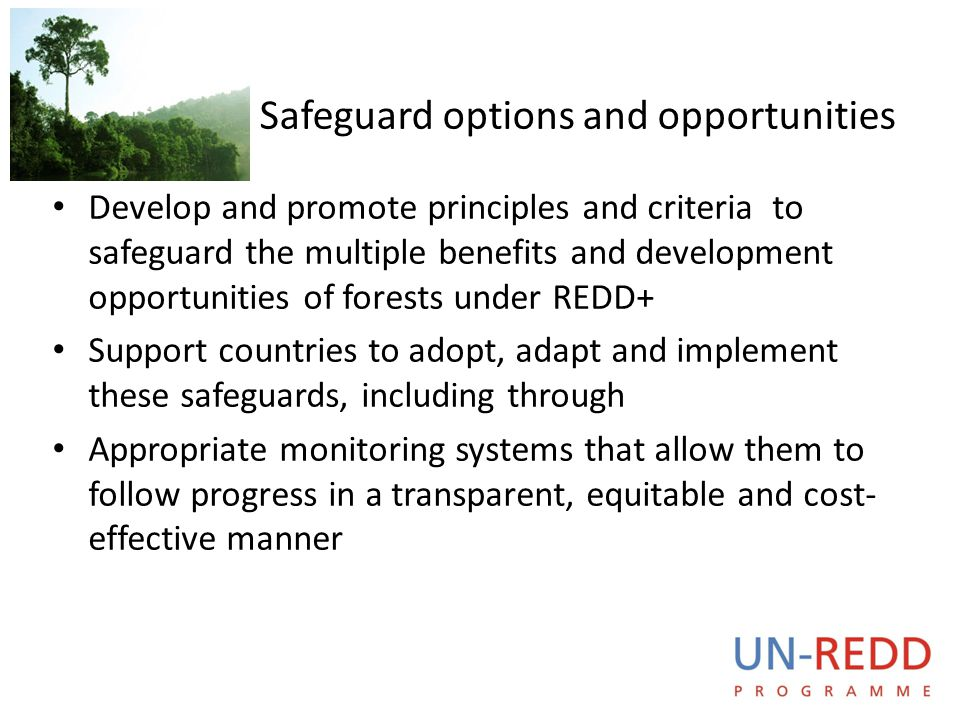 UN-REDD P R O G R A M M E Safeguard options and opportunities Develop and promote principles and criteria to safeguard the multiple benefits and devel