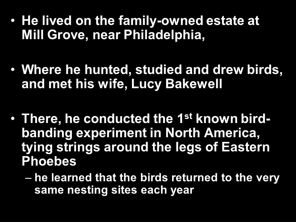 He lived on the family-owned estate at Mill Grove, near Philadelphia, Where he hunted, studied and drew birds, and met his wife, Lucy Bakewell There, he conducted the 1 st known bird- banding experiment in North America, tying strings around the legs of Eastern Phoebes –he learned that the birds returned to the very same nesting sites each year