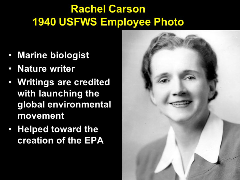 Rachel Carson 1940 USFWS Employee Photo Marine biologist Nature writer Writings are credited with launching the global environmental movement Helped toward the creation of the EPA