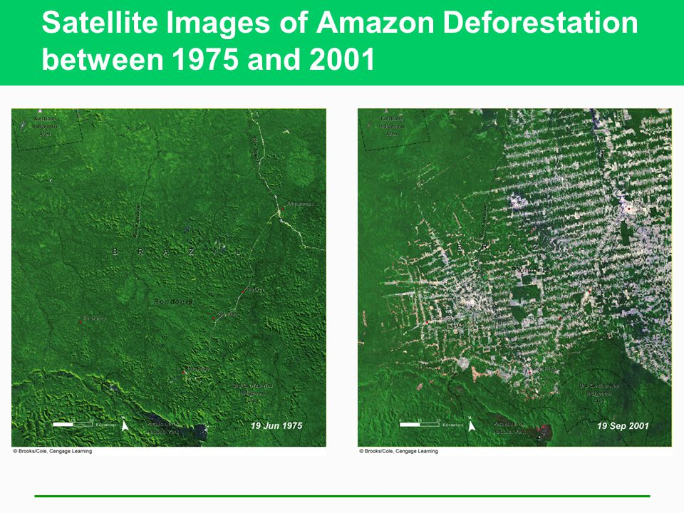 Satellite Images of Amazon Deforestation between 1975 and 2001