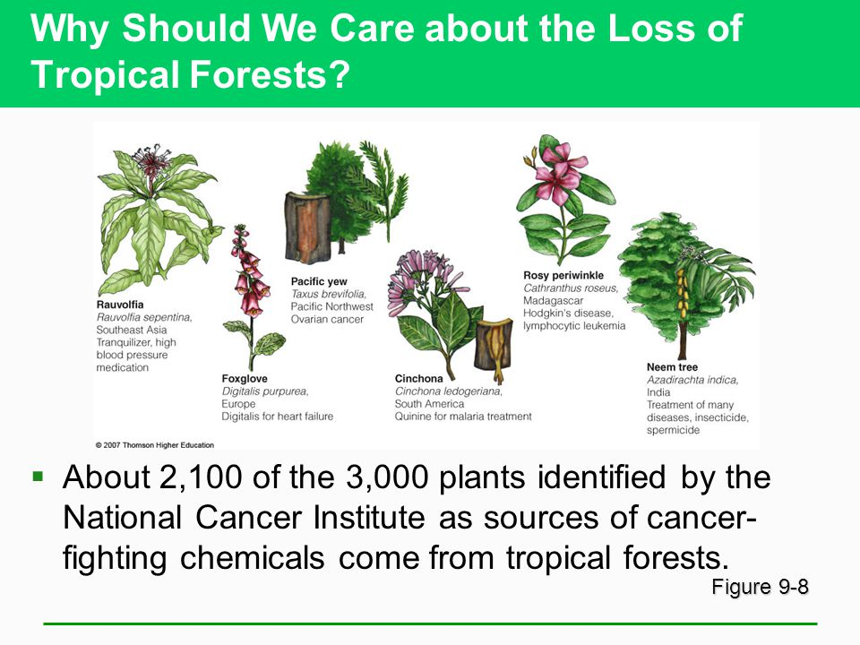 Why Should We Care about the Loss of Tropical Forests.