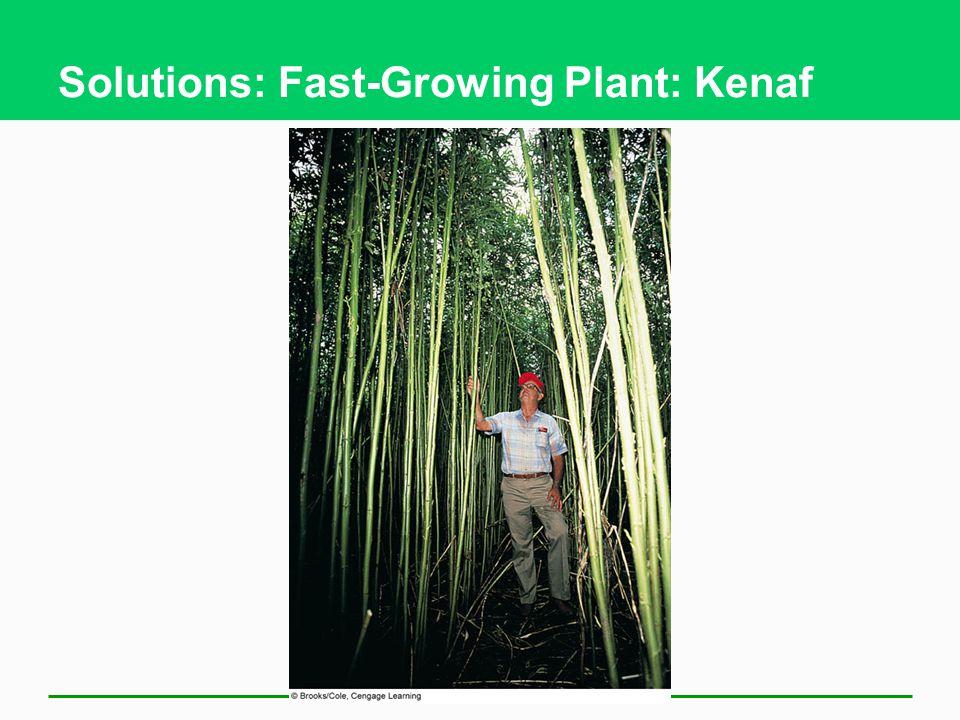 Solutions: Fast-Growing Plant: Kenaf