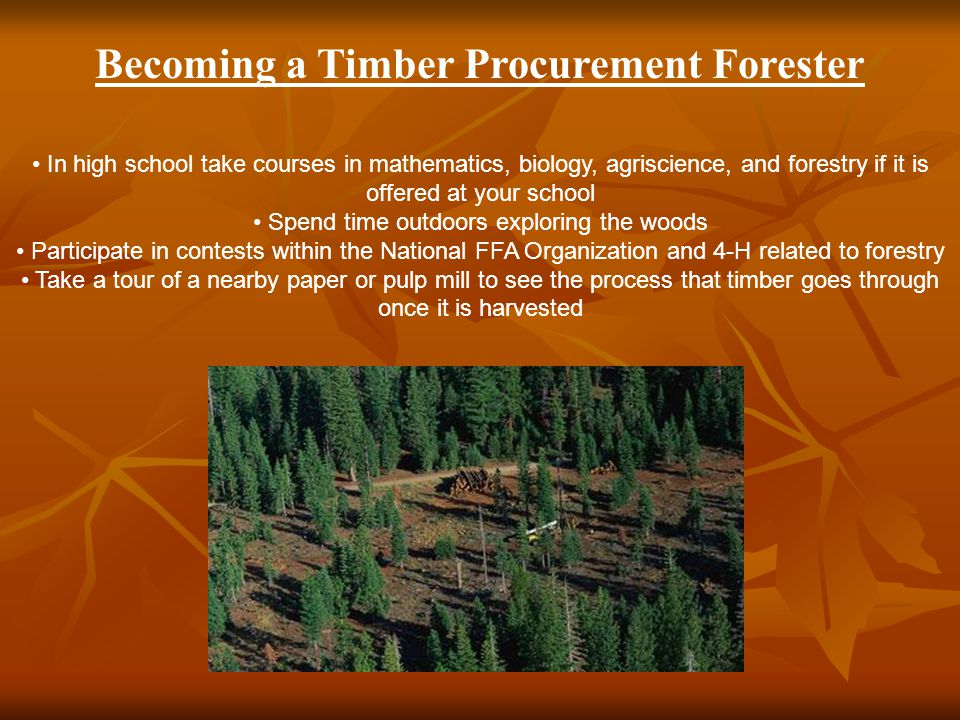 Becoming a Timber Procurement Forester In high school take courses in mathematics, biology, agriscience, and forestry if it is offered at your school Spend time outdoors exploring the woods Participate in contests within the National FFA Organization and 4-H related to forestry Take a tour of a nearby paper or pulp mill to see the process that timber goes through once it is harvested