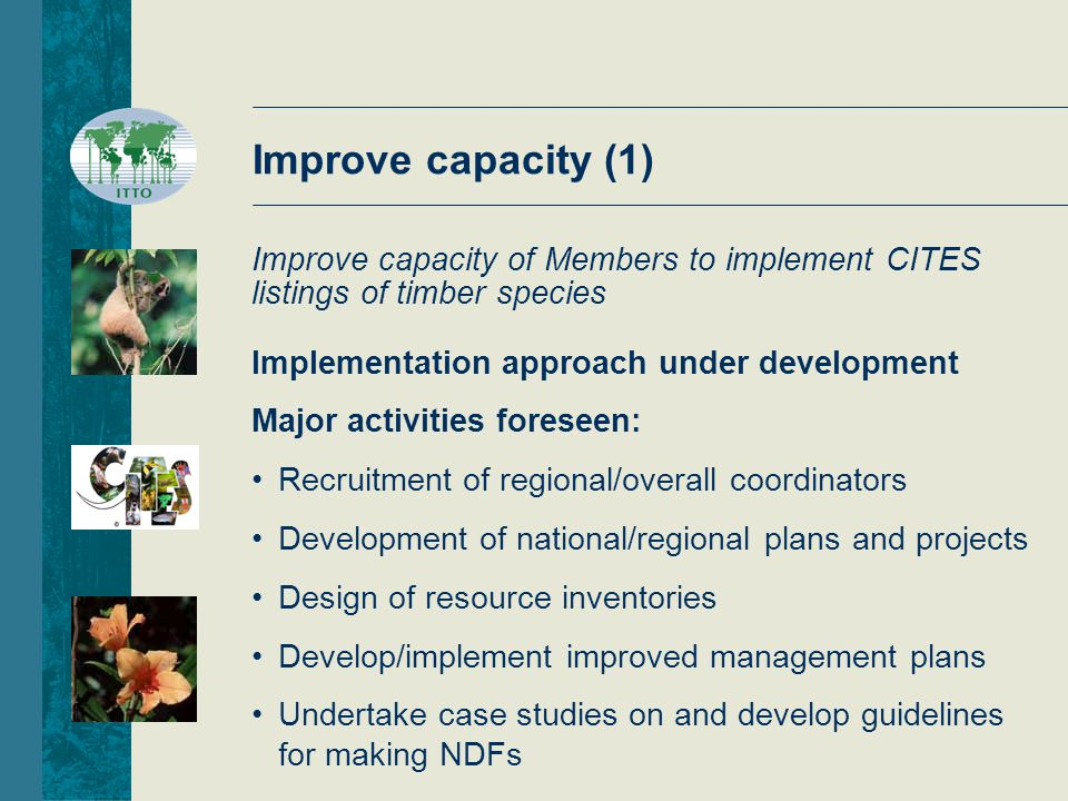 Improve capacity (2) Major activities foreseen (cont'd) Establish (or support existing) national/regional fora dealing with management of endangered timber species Develop cost-effective regulatory systems for endangered timber species (tracking, market studies, incentives) CITES training workshops Input from members welcome