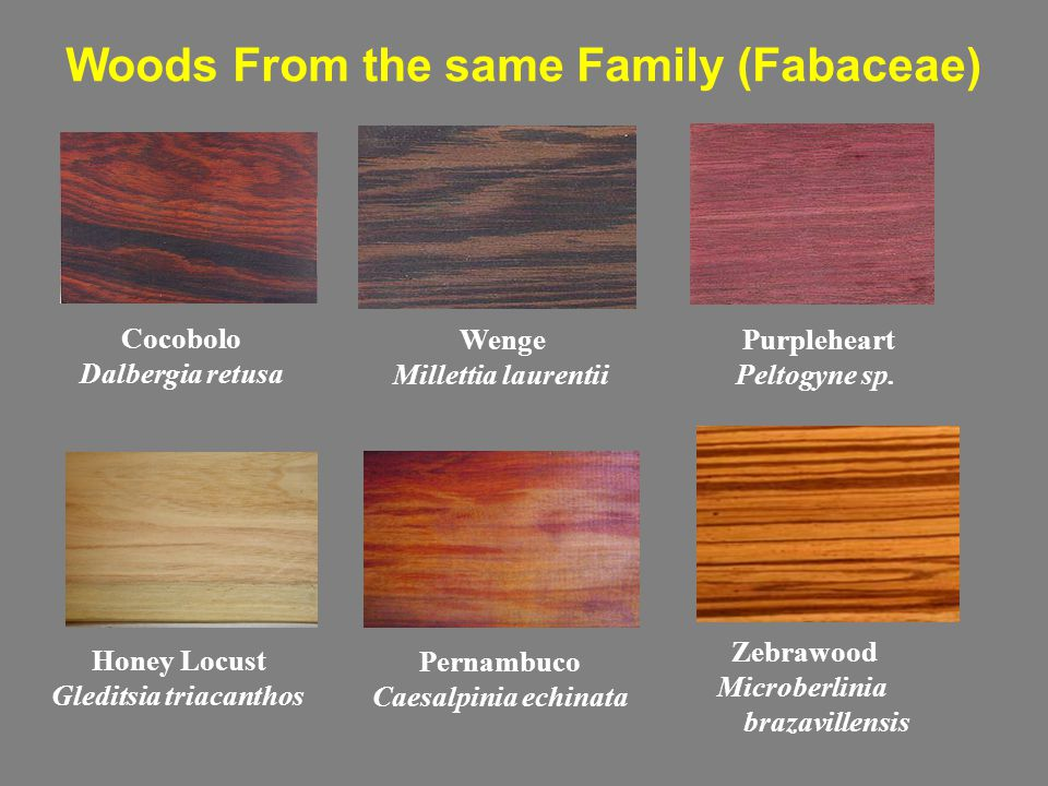 Woods From the same Family (Fabaceae) Cocobolo Dalbergia retusa Wenge Millettia laurentii Purpleheart Peltogyne sp. Zebrawood Microberlinia brazaville