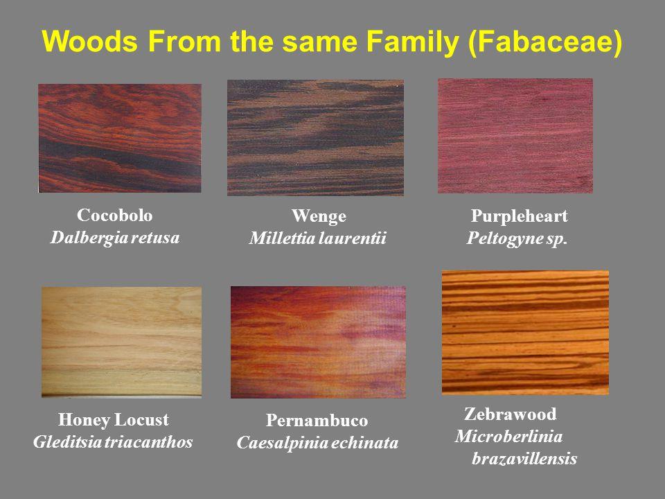 Woods From the same Family (Fabaceae) Cocobolo Dalbergia retusa Wenge Millettia laurentii Purpleheart Peltogyne sp.
