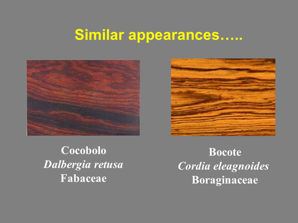 Similar appearances….. Cocobolo Dalbergia retusa Fabaceae Bocote Cordia eleagnoides Boraginaceae