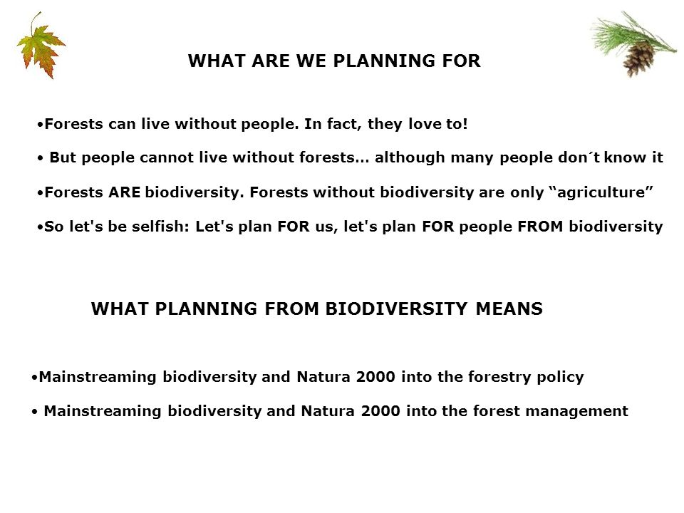 Mainstreaming biodiversity and Natura 2000 into the forestry policy Mainstreaming biodiversity and Natura 2000 into the forest management WHAT PLANNING FROM BIODIVERSITY MEANS WHAT ARE WE PLANNING FOR Forests can live without people.